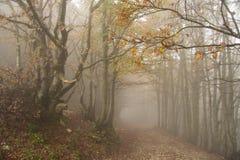 道路低谷有雾的一个森林在秋天 免版税库存图片