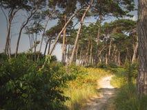 道路低谷杉木森林 库存图片