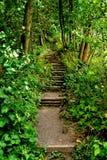 道路到森林里 图库摄影