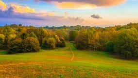 道路到森林里 免版税库存图片