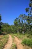 道路到森林 免版税库存图片