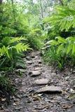 道路到蕨森林里 库存图片
