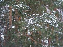 道路刻痕分支俏丽的背景在冬天森林里 免版税库存图片