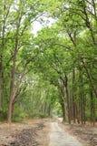 道路和在吉姆Corbett一直绿化 免版税库存照片
