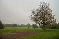 道路和树在公园 免版税库存照片