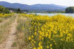 道路和黄色笤帚在监禁河一边在普罗旺斯 免版税库存图片