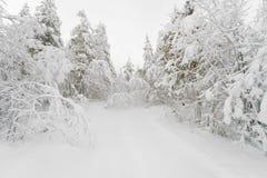 道路在一个多雪的冬天森林里 免版税库存照片