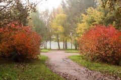 道路在一个有薄雾的公园 库存照片