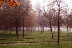 道路在一个有薄雾的公园 图库摄影