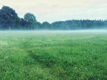 道路在一个有薄雾的绿色草甸 库存图片