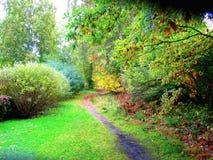 道路在一个美丽的秋天公园 库存照片