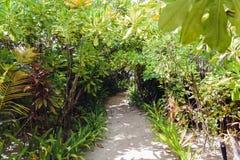道路在一个马尔代夫海岛上的森林里 图库摄影