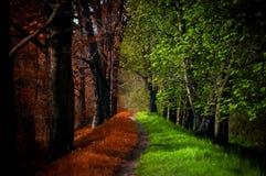道路在不可思议的森林、夏天和秋天 免版税库存图片