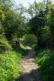 道路在乡下通过树篱 库存照片