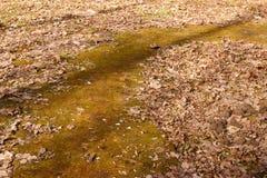 道路在公园,盖用老烘干叶子 免版税库存照片
