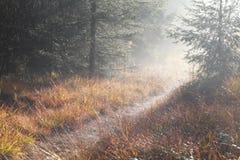 道路在具球果森林里早晨有雾的晴朗的 免版税库存图片