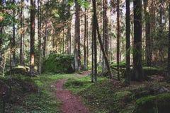 道路在具球果森林里 免版税库存图片