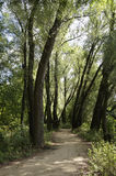 道路在华沙镇森林里 免版税库存照片