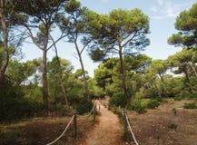 道路在地中海森林里 免版税库存图片