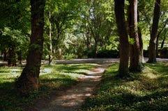 道路在城市公园 免版税图库摄影