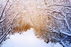 道路在多雪的冬天森林里 库存图片