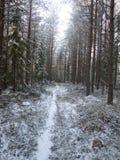 道路在多雪的森林2里 免版税库存照片