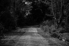 道路在大森林里 免版税库存图片