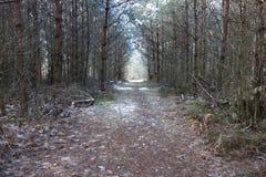道路在密集的森林里 图库摄影