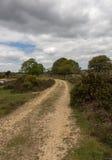 道路在新的森林里 免版税库存图片