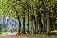 道路在春天公园。 在雨以后。 库存图片