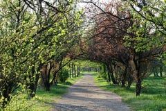 道路在春天公园颜色 免版税库存照片