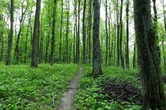 道路在春天森林里 免版税图库摄影