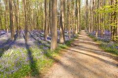 道路在有会开蓝色钟形花的草的森林里 免版税库存照片