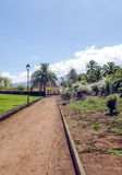 道路在有棕榈树的一个庭院里 免版税库存照片
