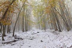 道路在有用雪盖的秋天树的森林里 免版税库存照片
