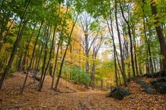 道路在有秋叶的森林 库存照片