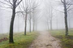 道路在有雾的森林里 免版税库存照片