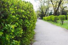 道路在枸子属植物的背景的公园 免版税库存图片