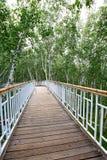 道路在桦树森林里 免版税库存照片