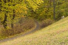 道路在森林在一秋天天 免版税库存图片