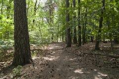 道路在森林里在柏林 免版税库存照片