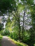 道路在森林里 免版税库存图片