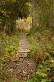 道路在森林里 库存图片