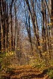 道路在森林里 免版税库存照片