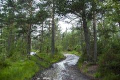 道路在森林 免版税库存照片