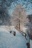 道路在沿用霜盖的冻湖冬天树的冬天公园 免版税库存照片