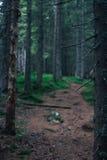 道路在深绿森林 库存图片