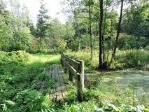 道路在湿森林在夏天,立陶宛里 图库摄影