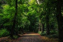 道路在狂放的森林里 免版税库存图片