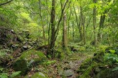 道路在用青苔盖的森林里 库存照片